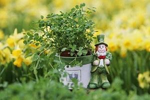 St Patrick Day Celebrations Take Place In Belfast