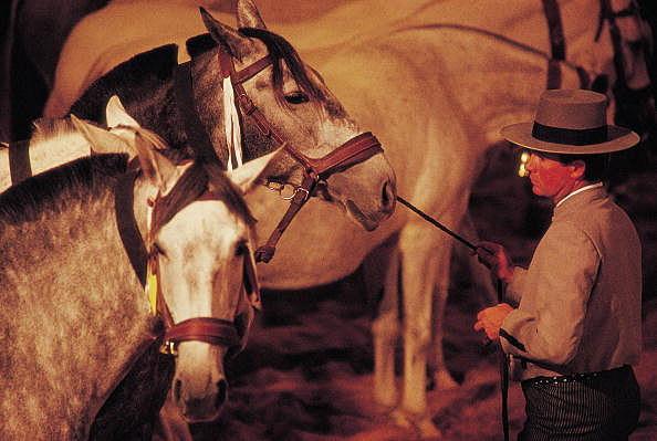 Tamer's horses Tamer's horses