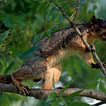 Squirrel season starts this weekend (Getty Images)