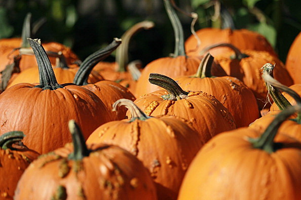 Join WYRK at Pumpkinville (Getty Images)