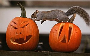A Squirrel Stands On A Halloween Jack-O'-Lantern