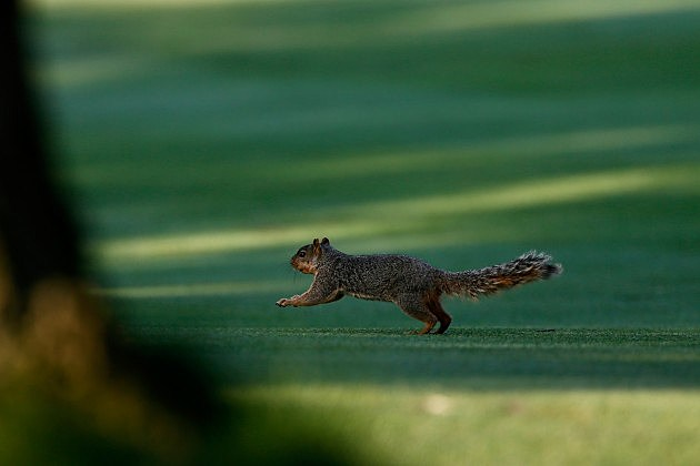 Squirrel Derbies May Be Banned (Getty Images)