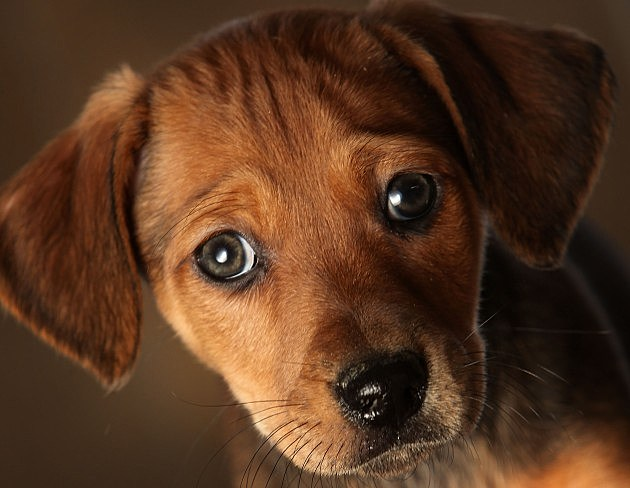 A puppy has beaten the odds! (Getty Images)