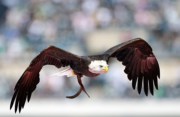 Eagle (Getty Images)