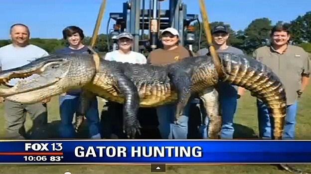 Gator Video (Youtube)