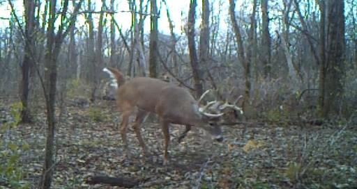Big Buck (Youtube/tsr6)