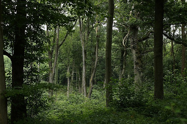 Forest (Getty Images)
