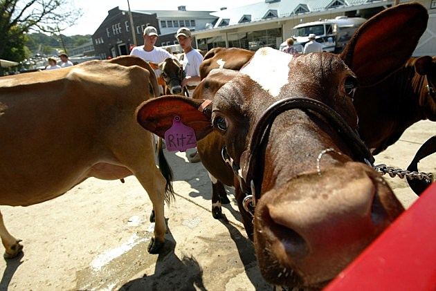 The 4-H needs some help (Getty Images)