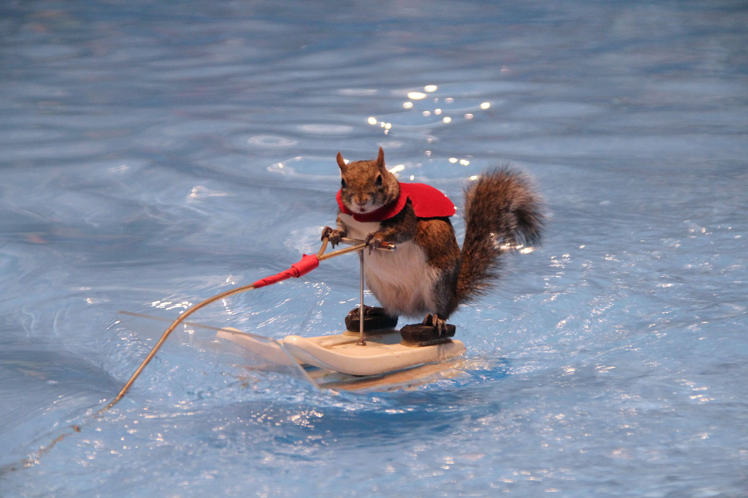 Don't Miss Twiggy the Water-Skiing Squirrel at Ribfest 2017!